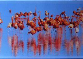 Картина на стекле Фламинго